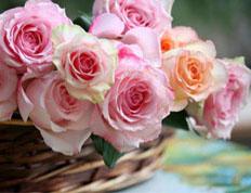 Розы / Roses