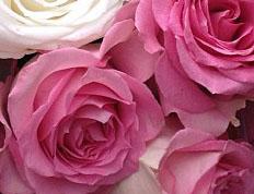 Доставка роз Чаусы